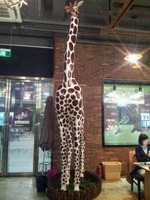 动物园咖啡馆 - zoo coffee评价